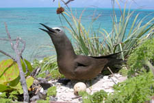 Caribbean Birding Trail, Jamaica, on Pinterest