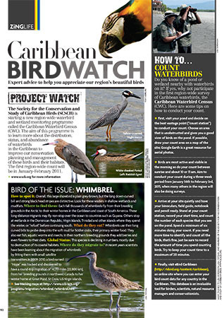 Caribbean BirdWatch appears in each issue of ZiNG.