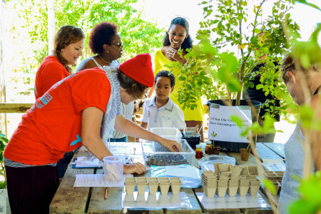 Over 100 lignum vitae seedlings were distributed during St. Martin's Endemic Animal Festival.