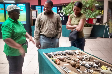 Study skins attracted a lot of attention at an outreach event held in a shopping center by the Bahamas National Trust.