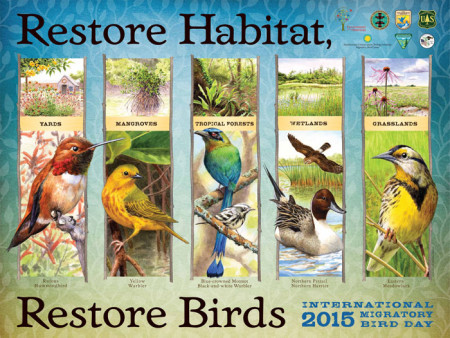 The theme for IMBD 2015 is Restore Habitat, Restore Birds.
