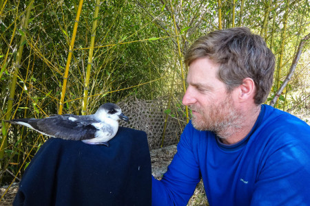 "Black-capped Petrel ""Tet Kay Jak"" meets biologist Adam Brown, photo courtesy of EPIC."