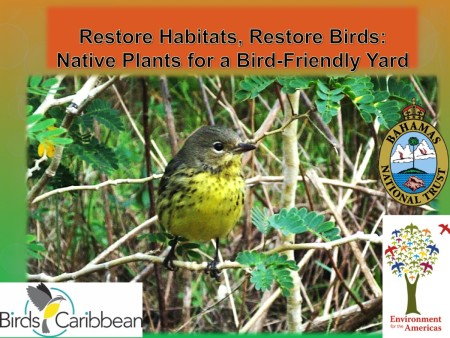 BirdsCaribbean webinars are fast becoming a can't-miss attraction.