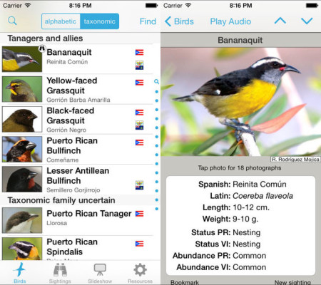 From images to audio, a wealth of information about the birds of the Puerto Rico bank just went pocket-size.