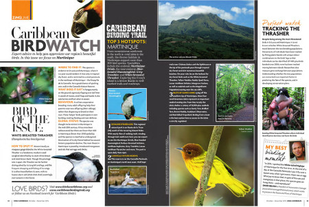 Head to Martinique in the latest edition of Caribbean BirdWatch.