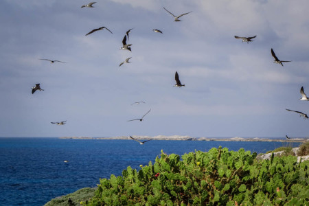 The team found thousands of nesting seabirds on the islands. (Photo by Mike Sorenson)