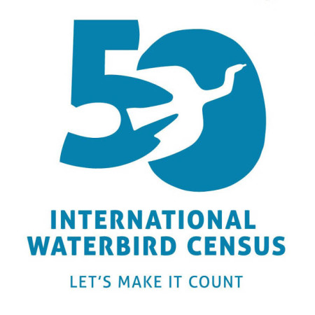 IWC logo with caption: The special logo for the 50th Anniversary of the IWC. Everyone is invited to use the logo for any purpose, such as articles, websites, newsletters and t-shirts. Everyone participating in the count is encouraged to share photos and stories on social media using the hashtags #IWC50 and #WaterbirdsCount