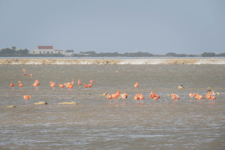 Stunningly beautiful American Flamingos which dot the stark landscape like pink flowers.