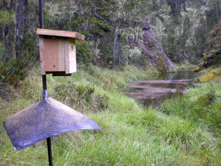 Artificial nest box - Golden Swallow