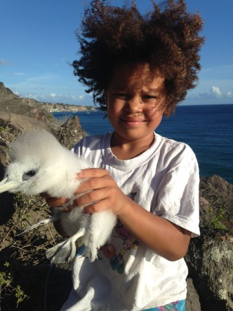 Lalia with Red-billed Tropicbird chick