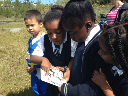 Students from Port Royal Primary School studying the ID cards during a trip to Spittal Pond Nature Reserve in Bermuda. (photo by Andrew Dobson)
