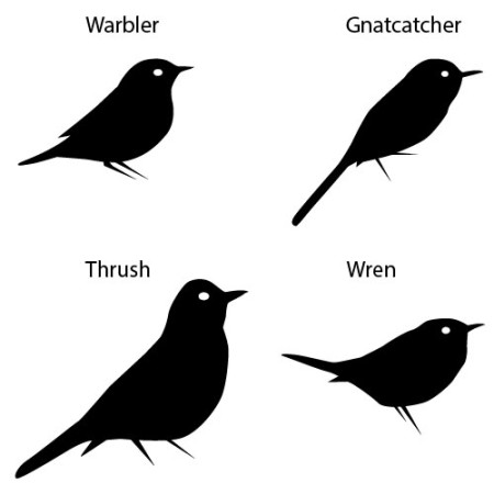 Comparison of warbler body profile with other birds. (Illustration by Christine Elder)