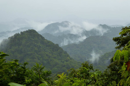 St. Lucia's breathtaking cloud forest in Edmund forest reserve. (photo by Steffen Oppel)