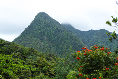 The steep slopes of Morne Tomassie could also provide hideouts for an endemic species. (photo by Steffen Oppel)