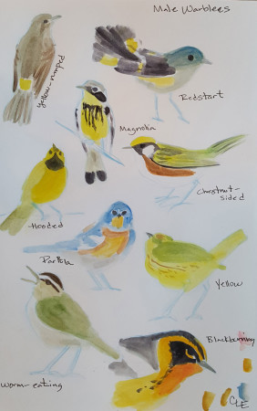 Quick field sketches with simple watercolors. (By Christine Elder)