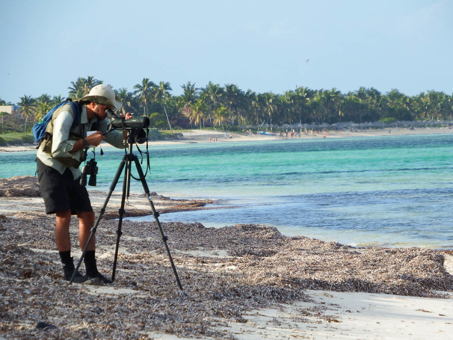 Dr. Ariam Jiménez counting plovers at playa Santa Lucia, Camagüey Province, Cuba. (photo by Jen Rock)