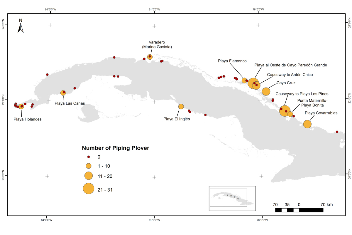 A closer look at Piping Plover numbers at each of the survey sites in Cuba, 2016. Map courtesy of Karen Aguilar Mugica.