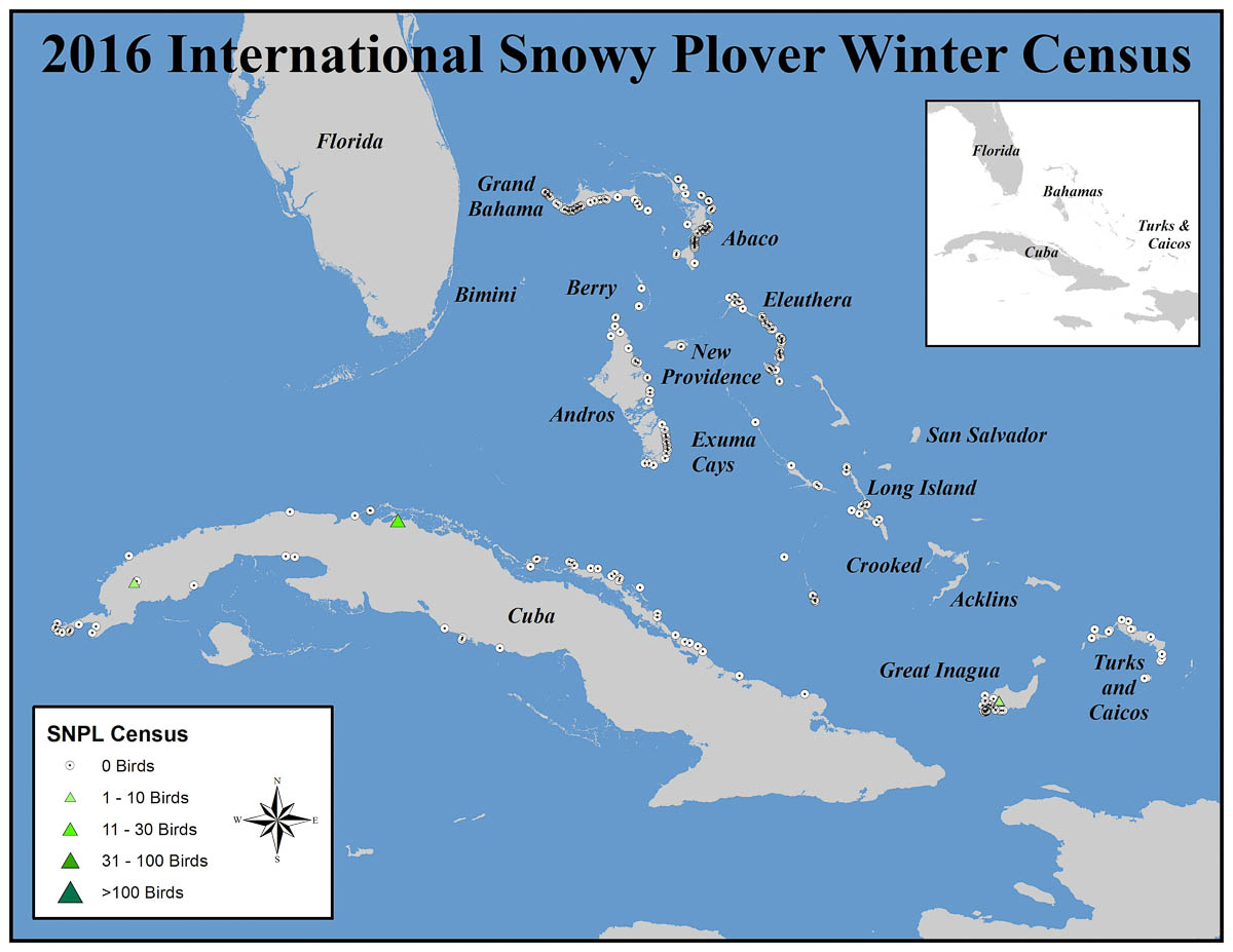 Location and numbers of Snowy Plovers seen in the Bahamas, Turks and Caicos, Islands and Cuba during the 2016 International Piping Plover Winter Census. Map courtesy of Audubon.