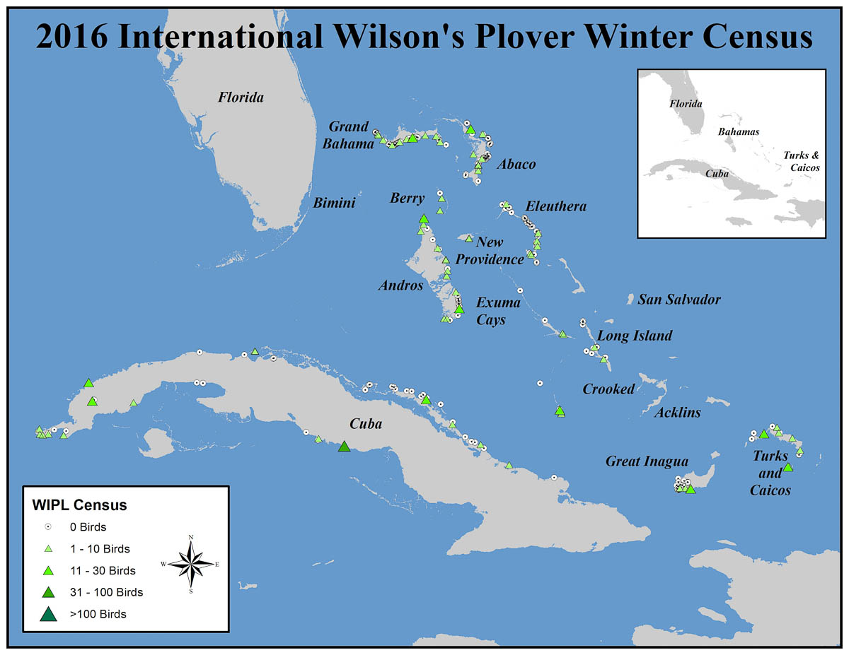 Location and numbers of Wilson's Plovers seen in the Bahamas, Turks and Caicos, Islands and Cuba during the 2016 International Piping Plover Winter Census. Map courtesy of Audubon.
