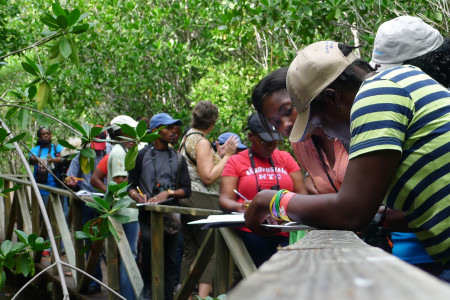 Participants creating an acoustic map of the different sounds they hear while in the mangrove forest. (Activity 6-J, Sounds Wild, in Wondrous West Indian Wetlands—Teachers' Resource Book, photo by Jessica Rozek)photo by Jessica Rozek)