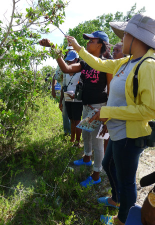 Plant identification in a 1-meter plot. (Activity 6-L, From the Land to the Sea, in Wondrous West Indian Wetlands—Teachers' Resource Book, photo by Jessica Rozek)