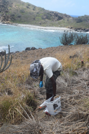 Youth field assistant conducting rat bait trials on East Seal Dog Island. (photo by Jost Van Dykes Preservation Society)