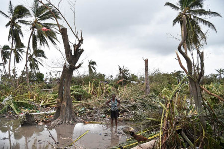 A woman stands in a field of destroyed trees after the passing of Hurricane Matthew, in Sous Roche in Les Cayes, in Southwest Haiti, on October 6, 2016. AFP Photo / Hector Retamal
