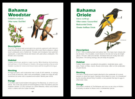 The guide includes 60 common birds of the Bahama Islands described using large fonts and simple language- a perfect addition to any new birder's collection!