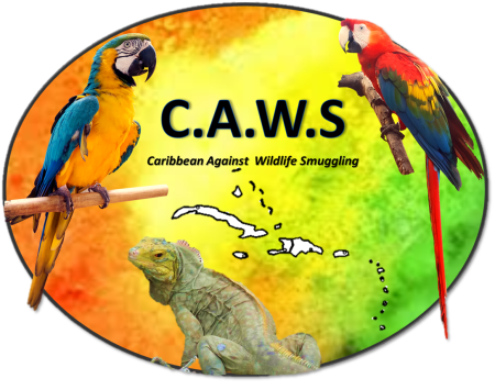 CAWS (Caribbean Against Wildlife Smuggling) logo created by Team Traffic to help raise the profile of the threats to our native wildlife from wildlife smuggling and what everyone can do to help.