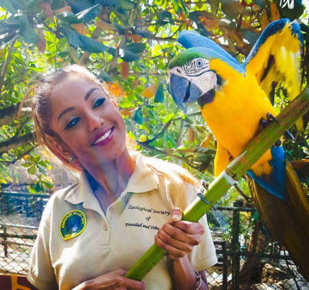 Sharleen Khan holding a Blue-and-Yellow Macaw at the Emperor Valley Zoo in Trinidad. This macaw is the zoo's Animal Ambassador and is part of the zoo's education program where the macaw is used to  raise awareness of wildlife conservation, specifically conservation of this species in the wild. (Photo courtesy of Emperor Valley Zoo)
