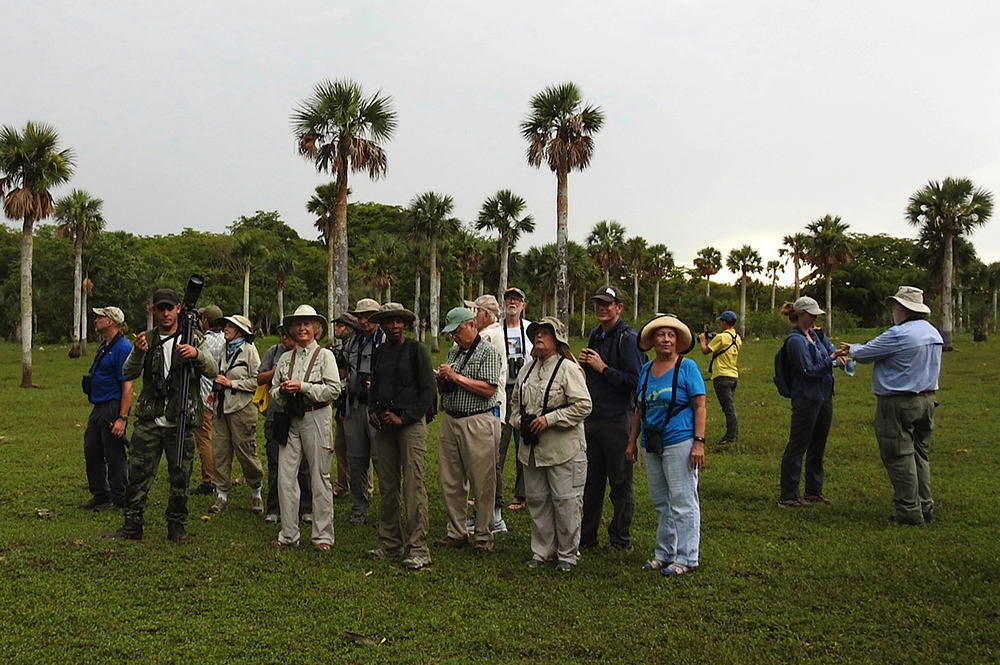 In the Savannah Soplillar of Zapata Swamp, seeking Bare-legged and Pygmy Owls. (Photo by Erika Gates)