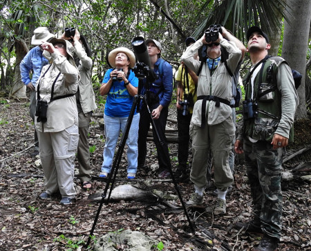 Catching a glimpse of Cuban Vireos and Yellow-headed Warblers in Bermeja. (Photo by Ericka Gates)