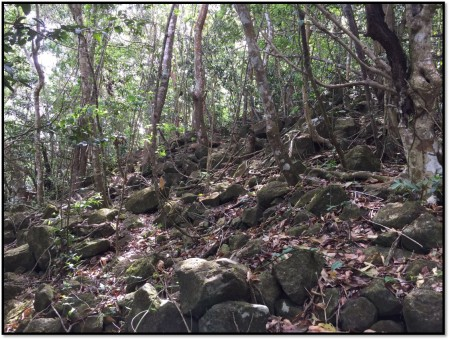 Forest understory before Hurricane Irma (by Hannah Madden)