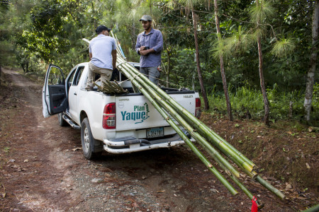 The first step before setting up plots is to locate stands of bamboo and to harvest poles, cut them to specified lengths, and pack them up for transport. (photo by Spencer Schubert)