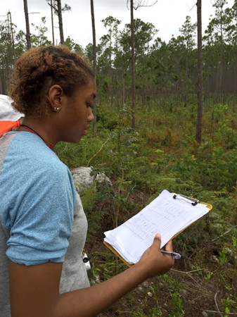 Briana Yancy measuring nest site characteristics. (Photo by Kevin Omland)