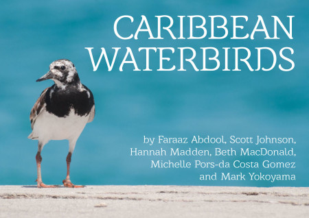 Learn about Caribbean waterbirds and the habitats that they depend on.