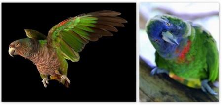 Bird News – Page 5 – BirdsCaribbean