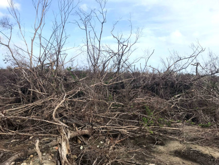Lowland forest heavily impacted by the storm surge with little sign of recovery on the south of Barbuda (Photo by Jeff Gerbract)