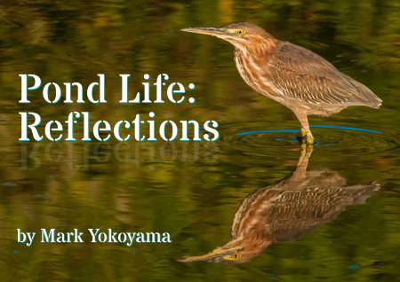 Download the new ebook Pond Life: Reflections for free.