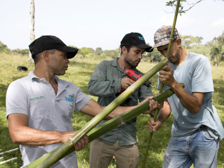 Plan Yaque technicians assist Spencer in assembling artificial bird perches. Bamboo grows as a feral exotic plant at many many sites surrounding Jarabacoa. Not only is harvesting bamboo poles for perch materials free, but it also helps to control overgrown stands where it has become invasive. Before burying bamboo perches in the ground, we carefully treat the poles over an open fire to prevent resprouting. (photo by Eduardo Infante Sicard, Plan Yaque Inc.)