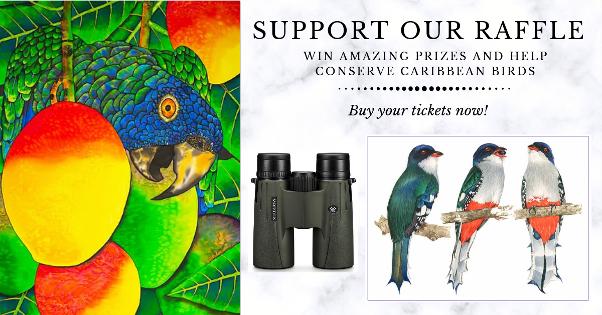 Win One of these Amazing Prizes in BirdsCaribbean's 2019