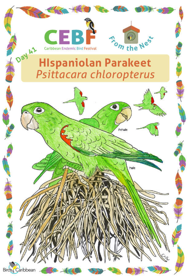 Shiny animal parrots shaped party eyewear Fighting to Achieve