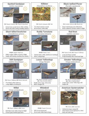 ATLANTIC FOREST 9 AVES DOLLARS 2015 FLAMINGO BIRD ERROR AT TOP MARGIN UNC