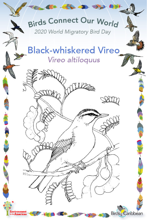 Featured Birds Birdscaribbean
