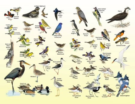 Resources Birdscaribbean