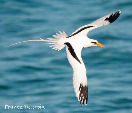 Threatened Birds Birdscaribbean